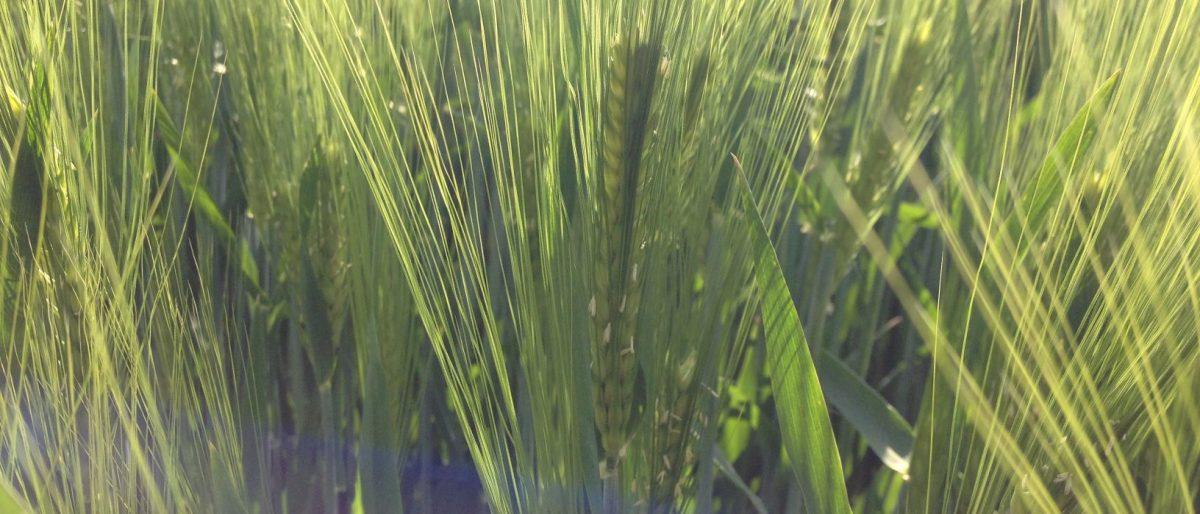 Getreide BioBördeland GbR
