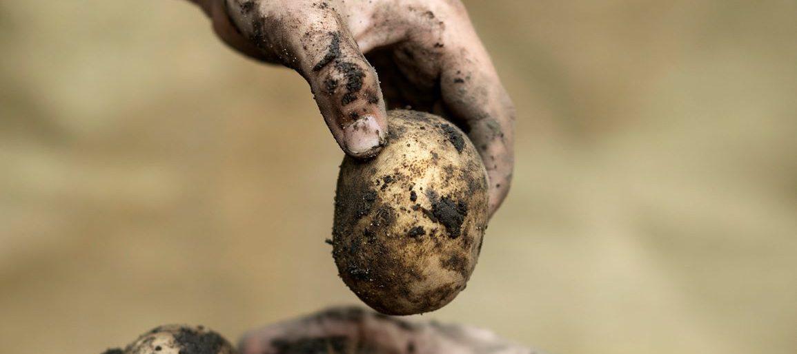 Kartoffelhand BioBördeland GbR